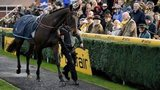 Sprinter Sacre, fitted with a heart monitor, in the Newbury parade ring