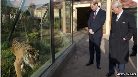 Prince William and Prince Charles looking at a tiger in a zoo