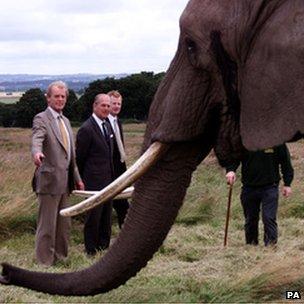 Prince Philip standing near an elephant