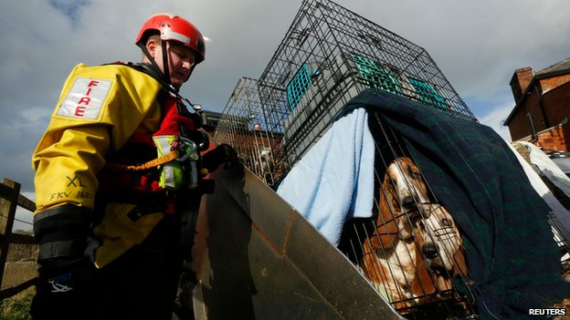 Devon and Somerset Fire and Rescue Service rescue dogs and cats in Burrowbridge, Somerset Levels, on 9 February 2014