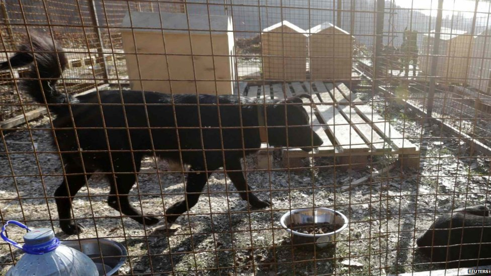 Russian Billionaire Saves Stray Dogs and Cats in Sochi | petMD