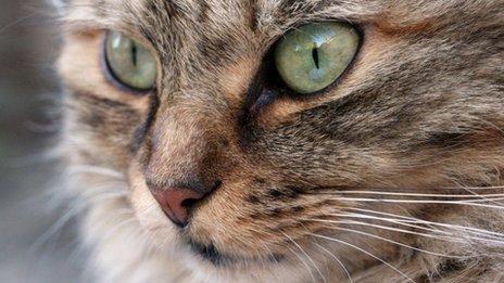 Vote-Rigging in Cat Contest