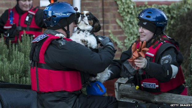 A dog being rescued from a property in Egham, Surrey