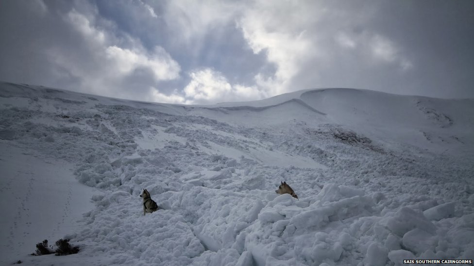 An avalanche risk forecaster's dogs among blocks of avalanche debris in the Southern Cairngorms