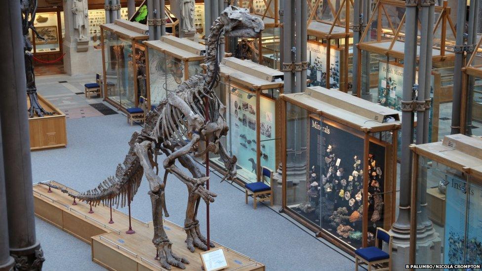 Iguanodon plaster cast