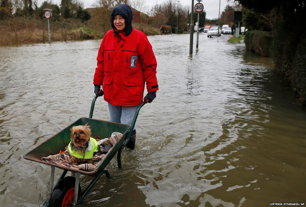 A local resident pushes her dog in a wheelbarrow, in the flooded part of the town of Staines-upon-Thames.