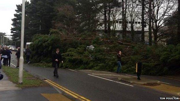 fallen tree in Aberystwyth