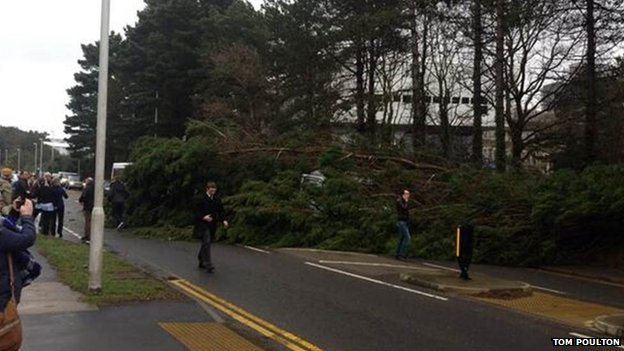 Tree blown over in Aberystwyth