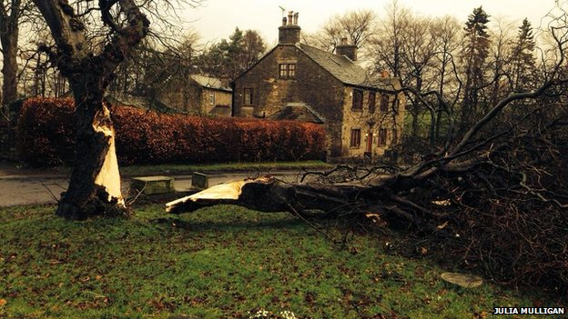 Tree down in North Yorkshire