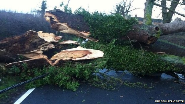 Fallen tree on Towersey Road