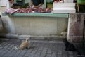 Two cats wait for food in Morocco