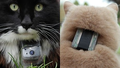 Cats with GPS collars