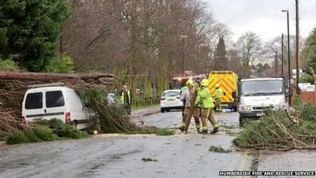 Van hit by tree in Grimsby