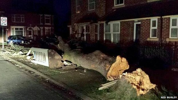Fallen tree destroys a phonebox