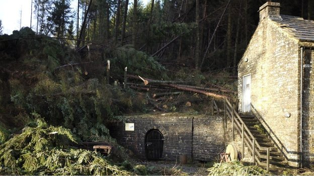 Fallen trees at Killhope