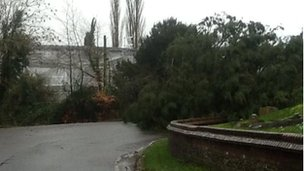 Tree down twisted with power cables in Collingbourne Ducis