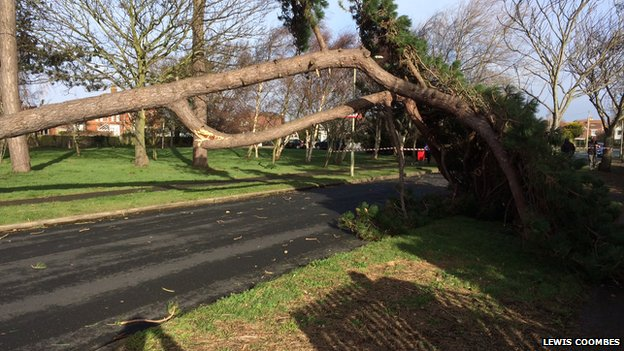 Tree down in Lee on the Solent