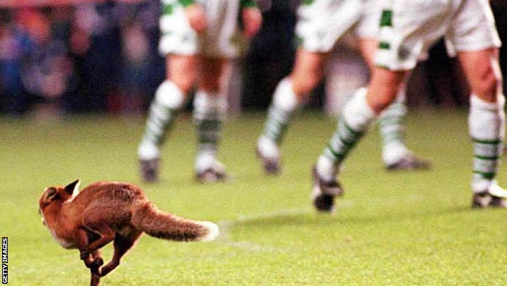 Fox at the Old Firm