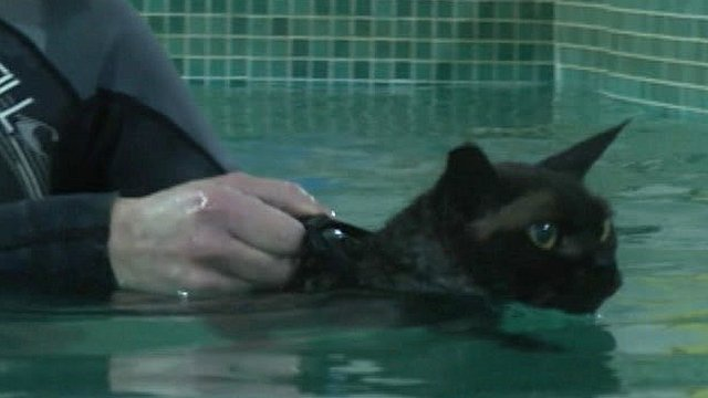 Jenny introduces Morph the swimming cat