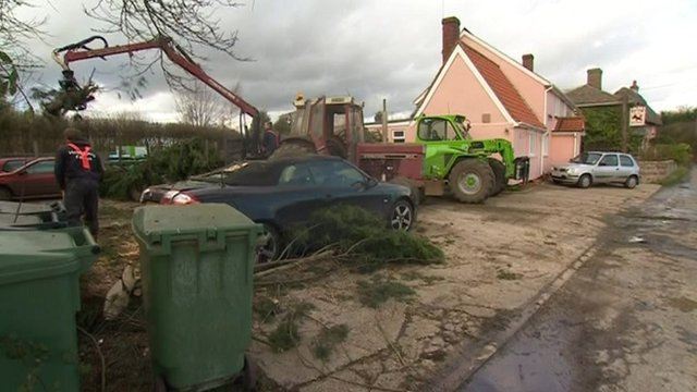 Tree on cars in pub Essex pub car park