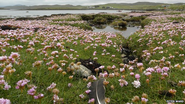 The foreshore of Loch Roag at Callanish.