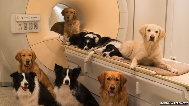 Dog and human brain link revealed