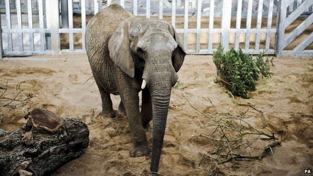 Buta the elephant at Noah's Ark Zoo Farm