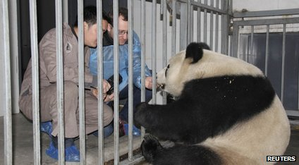 Zoo keepers and panda