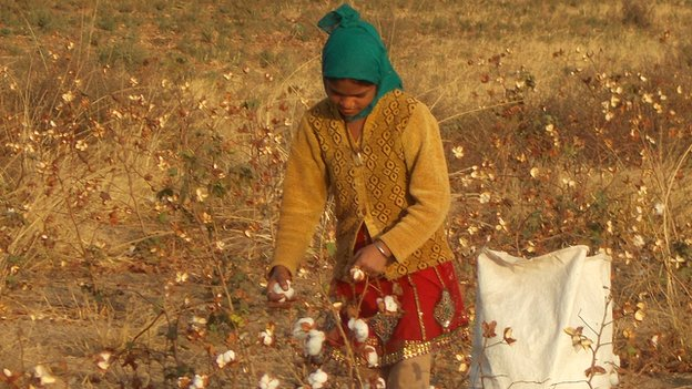 Girl picking cotton in India