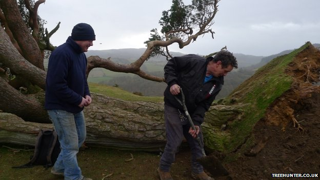 Volunteers covering the tree's roots