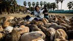 Two tourists sit and feed hundreds of rabbits at Okunoshima Island on February 24, 2014