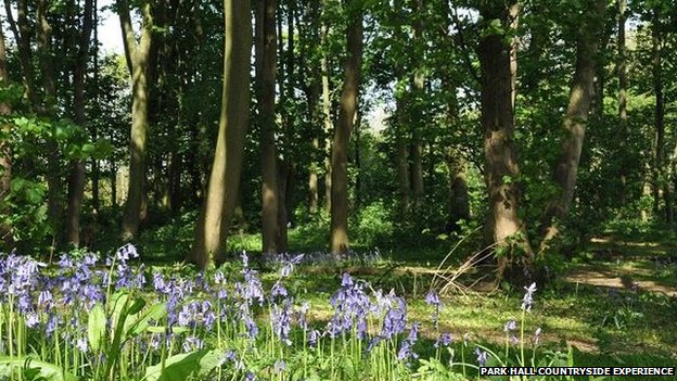The bluebell woods at Park Hall