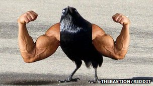 Bird with arms