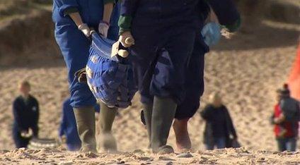 Seal in sling-stretcher on Winterton beach