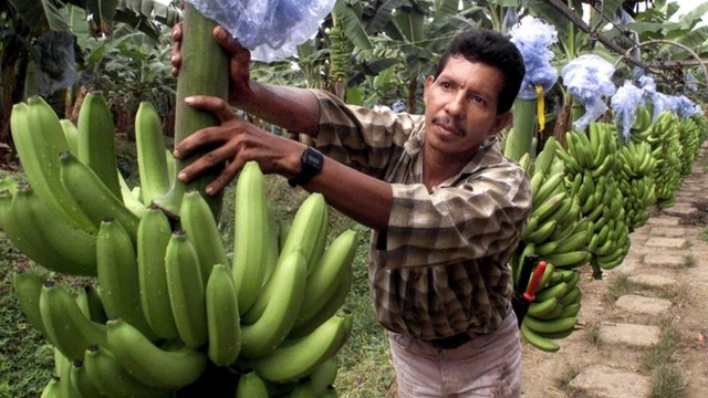 What do you really know about bananas?