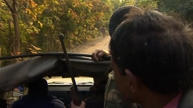 Men looking for tiger in truck with gun
