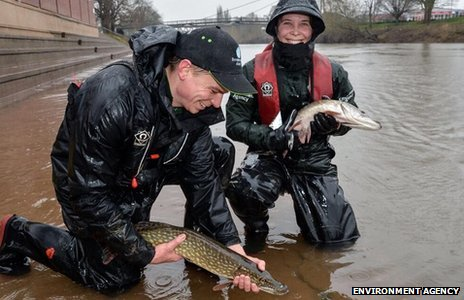 Environment Agency staff release fish