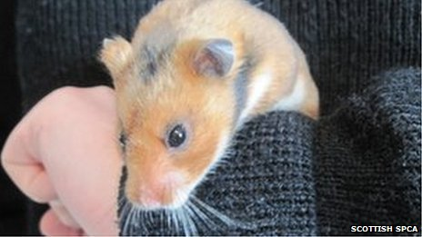 Fievel the hamster