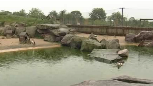 Blackbrook Zoological Park