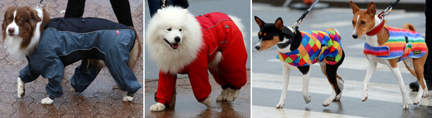 Composite image of dogs in onesies and coats at Crufts