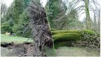 Tree storm damage 'worst since 1987'