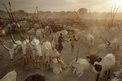 A remote camp in South Sudan visited during the making of Photographing Africa