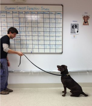 A dog being trained for to identify ovarian cancer samples