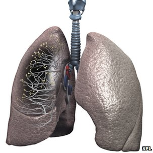 How a pair of lungs look