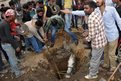 Residents of Jalandhar in India attempt to rescue a horse that had fallen into a hole in the town
