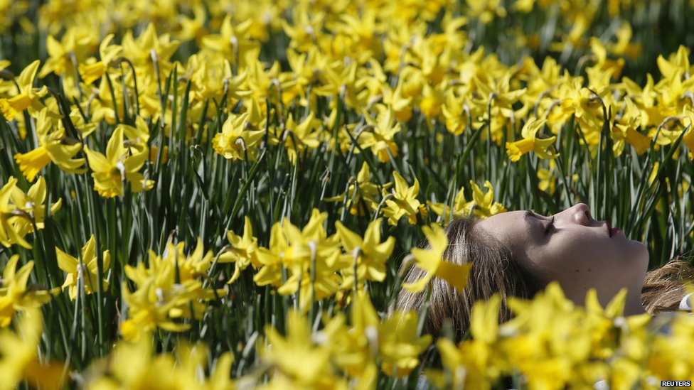 Woman resting among daffodils in London