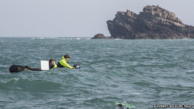 Alderney Wildlife Trust