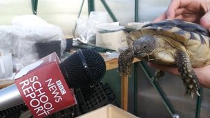 Microphone and tortoise