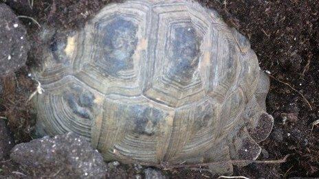 Tucker the tortoise