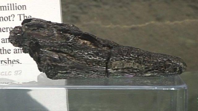 The fossilised skull found on a beach near Sandown